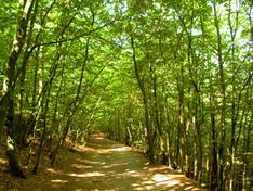 Wälder Insel Usedom